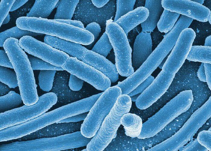 bakterie - probiotické kultury